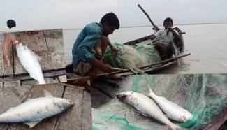 Fishermen returning from sea following ban on Hilsa fishing